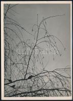 cca 1935 Kinszki Imre (1901-1945) budapesti fotóművész hagyatékából, pecséttel jelzett, aláírt és a szerző által feliratozott vintage fotó (Nyírfa), 18x13 cm