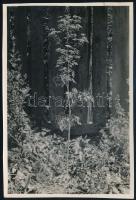 cca 1935 Kinszki Imre (1901-1945) budapesti fotóművész hagyatékából jelzés nélküli, de a szerző által feliratozott vintage fotó (Conium maculatum), 17x11,4 cm