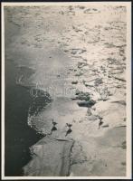 cca 1932 Kinszki Imre (1901-1945) budapesti fotóművész hagyatékából, pecséttel jelzett vintage fotó (Három kacsa a jégen), 17,5x13 cm