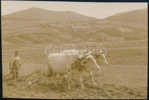 cca 1936 Kinszki Imre (1901-1945) budapesti fotóművész hagyatékából, jelzés nélküli vintage fotó, a szerző által feliratozva (Őszi szántás), 4,6x6,9 cm