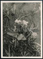 1930 Kinszki Imre (1901-1945) budapesti fotóművész hagyatékából, a szerző által feliratozott vintage fotó (Rákos), 8,7x6,3 cm