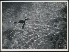 cca 1935 Kinszki Imre (1901-1945) budapesti fotóművész hagyatékából, pecséttel jelzett, aláírt vintage fotó (madár uszoda), sarkán törésvonal, 18x24,5 cm