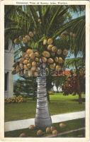 Sunny Isles (Florida), cocoanut tree