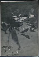cca 1933 Kinszki Imre (1901-1945) budapesti fotóművész hagyatékából, pecséttel jelzett vintage fotó (szitakötő), 12,5x8,5 cm