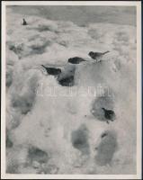 cca 1933 Kinszki Imre (1901-1945) budapesti fotóművész hagyatékából, pecséttel jelzett vintage fotó (madarak a hóban), képoldalára átnyomódott a hátoldalán levő gyermekrajz, 15x11,6 cm