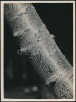 cca 1934 Kinszki Imre (1901-1945) budapesti fotóművész hagyatékából, a szerző által - írógéppel -  feliratozott, vintage fotó (tavasz), 24x18 cm