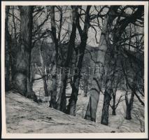 cca 1935 Kinszki Imre (1901-1945) budapesti fotóművész hagyatékából, jelzés nélküli vintage fotó (erdő a hegyoldalon), 18x19 cm
