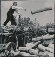 cca 1934 Kinszki Imre (1901-1945) budapesti fotóművész hagyatékából, pecséttel jelzett vintage fotó (Fatelepen), 13x12,6 cm