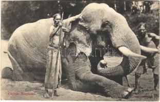 Ceylon, Sri Lanka; Elephant (EK)