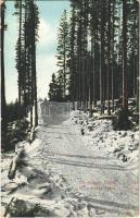 1911 Tátralomnic, Tatranská Lomnica (Tátra, Magas Tátra, Vysoké Tatry); téli sportpálya, Palota-forduló / winter sports field, sledding curve (EK)