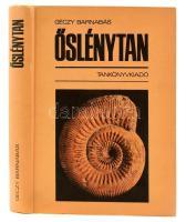 Géczy Barnabás: Őslénytan. Bp.,1986, Tankönyvkiadó. Második kiadás. Kiadói kartonált papírkötés, kis kopásnyomokkal, érdekes ajándékozási sorokkal. Megjelent 2000 példányban.