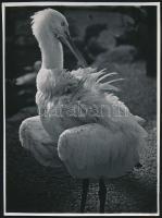 cca 1935 Kinszki Imre (1901-1945) budapesti fotóművész hagyatékából pecséttel jelzett vintage fotó (The Heron's Cosmetics), sarkán kis törés, 23,5x17,6 cm