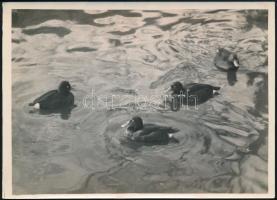 cca 1934 Kinszki Imre (1901-1945) budapesti fotóművész hagyatékából, pecséttel jelzett és aláírt vintage fotó (Cigányrécék)