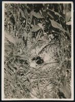 cca 1932 Kinszki Imre (1901-1945) budapesti fotóművész hagyatékából, jelzés nélküli, de a szerző által feliratozott vintage fotó (Grille), 8,4x6,2 cm