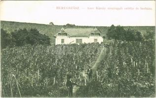 1915 Beregszász, Beregovo, Berehove; Auer Károly tórafüggői szőlője és borház. Auer K. és Kovács K. kiadása. W.L. Bp. 6107. 1912-15. / vineyard and wine house (EK)