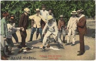 Havana, Habana; Rina de Gallos / cock fight, folklore / kakasviadal (Rb)