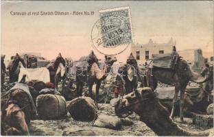 Aden, Caravan at rest Sheikh Othman, camels