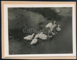 cca 1929 Vízparton, Kinszki Imre (1901-1945) budapesti fotóművész hagyatékából, jelzés nélküli vintage fotó, a szerző által készített albumból kiemelve, 4,3x5,8 cm