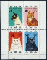 Batum macska kisív