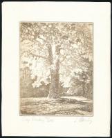 Almásy László (1926-): Fák . Rézkarc, papír, jelzett, számozott (76/295), 17×13 cm