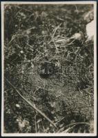 cca 1933 Kinszki Imre (1901-1945) budapesti fotóművész hagyatékából, jelzés nélküli vintage fotó, de a szerző által németül feliratozva, 8,6x6 cm