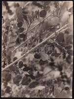 cca 1932 Kinszki Imre (1901-1945) budapesti fotóművész hagyatékából jelzés nélküli vintage fotó, de a szerző által németül feliratozva, 8x5,8 cm