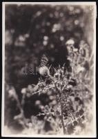 cca 1933 Kinszki Imre (1901-1945) budapesti fotóművész hagyatékából jelzés nélküli vintage fotó, de a szerző által feliratozva, 8,6x6,1 cm