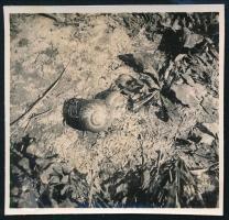 cca 1936 Kinszki Imre (1901-1945) budapesti fotóművész hagyatékából jelzés nélküli vintage fotó (csiga), 5,7x5,4 cm