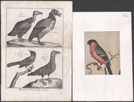 cca 1789-1890, 2 db madár témájú metszet: Pietro Scattaglia (1739-1810): Ornithologie, Histoire Naturelle c. könyvből, 195. tábla, rézmetszet, papír, hajtásnyommal, 23x16 cm. + Madár, színes litográfia, papír, paszpartuban, jelzés nélkül, 12,5x10 cm
