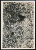 cca 1933 Kinszki Imre (1901-1945) budapesti fotóművész hagyatékából, általa feliratozott vintage fotó (német feliratú), 8,5x6 cm