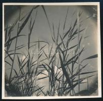 cca 1937 Kinszki Imre (1901-1945) budapesti fotóművész hagyatékából jelzés nélküli vintage fotó (nádas), 5,6x5,6 cm