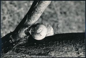 cca 1978 Konkoly Katalin: Kompozíció, feliratozott vintage fotóművészeti alkotás, 15,8x23,4 cm