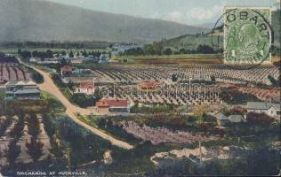 Huonville, orchards