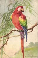 Parrot, litho s: C. Klein, Papagáj, litho s: C. Klein