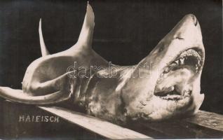 Haifisch / shark, Cápa
