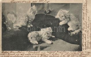 Cats, Macskák
