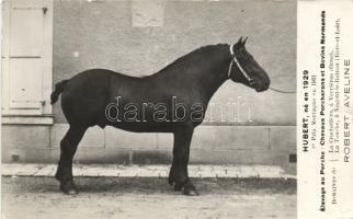Hubert racehorse, born in 1929, Hubert versenyló, született 1929