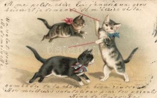 Cats playing, Macskák játék közben
