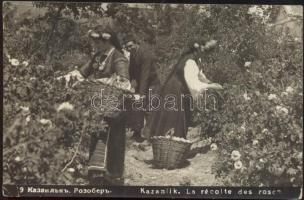 Kazanluk, Kazanlik (Rose Valley) rose picking