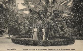Batumi, Batoum; Alexander park, palm tree