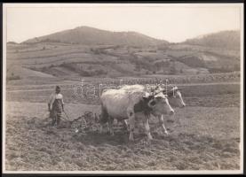 1930-1935 Kinszki Imre (1901-1945): Tabi Jóska. Vintage fotó, szerzői pecséttel jelzett, 12x17cm