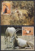 1985 WWF: Antilopok sor 4 db CM-en Mi 941-944