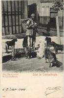 Constantinople, stray dogs