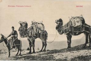 Smyrna, Chameaux Pehlavans (lutteurs) / camel wrestler (EK)