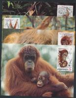 WWF Orangutans set on 4 CM, WWF Orángután sor 4 CM