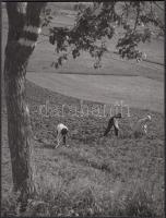 1938 Osoha László: Gyomlálók, pecséttel jelzett vintage fotóművészeti alkotás, kiállítási emlékjeggyel, 21x16 cm