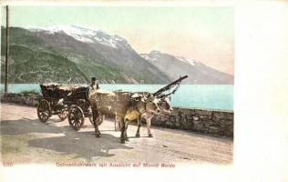 Monte Baldo, Ochsenfuhrwerk / ox carriage
