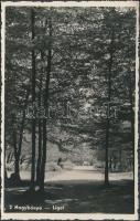 Baia Mare, park, Nagybánya, liget