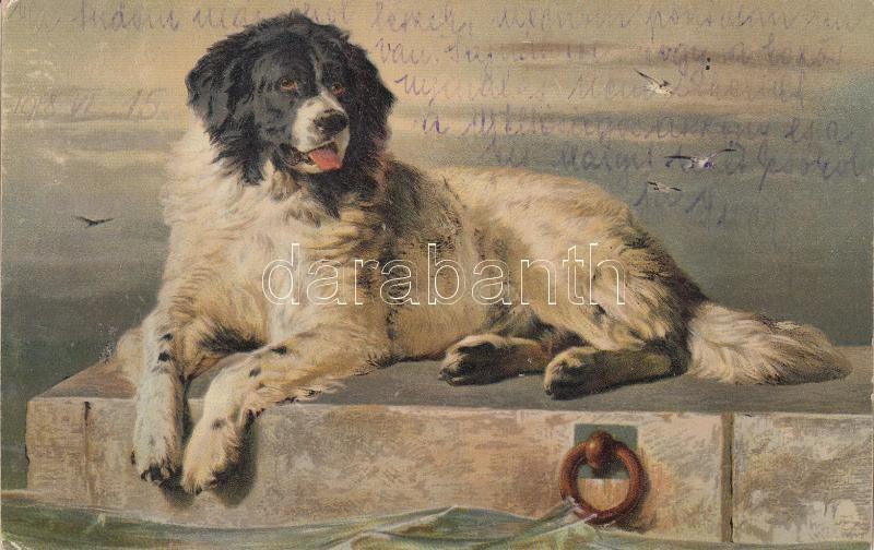 Dog s: Sir Edwin Landseer Kutya s: Sir Edwin Landseer