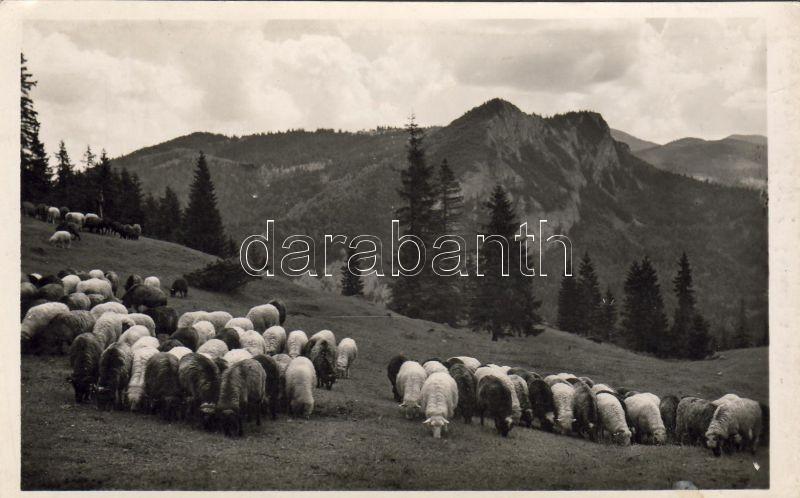 Lacul Rosu, Red lake; sheep flock, mountain, Gyilkos-tó, Juhnyáj a Gyilkoshegy tövében